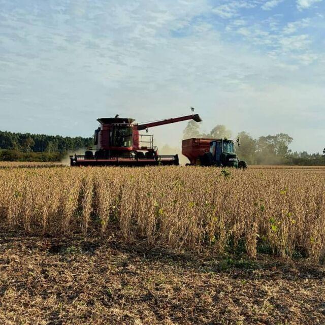O barulho constante das colheitadeiras, sinaliza as boas perspectivas da safra de soja. 🌾🌾🌾 Possuímos a infraestrutura e a segurança para o recebimento dos grãos. Para a Cotribá, a sua safra vale ouro.