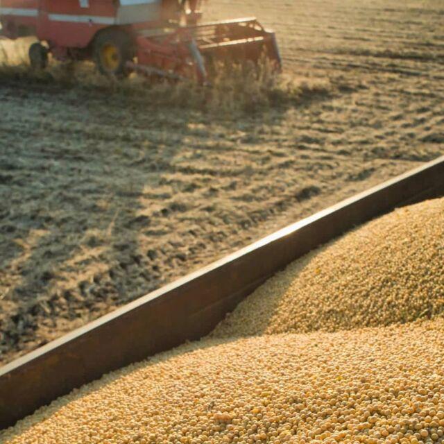 O Rio Grande do Sul colhe uma das maiores safras de soja dos últimos anos. Para a Cotribá a sua safra vale ouro.🌾📈
