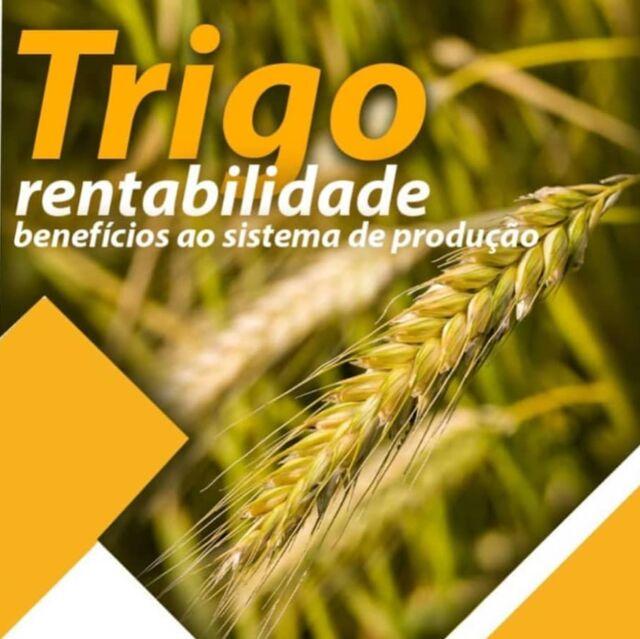 Possuímos um portifólio robusto de cultivares de trigo, com materiais que atendem as mais diversas demandas de produtividade, estabilidade e rusticidade. Procure hoje mesmo um consultor técnico da Cotribá. 👩🏽🌾🌾👨🏻🌾