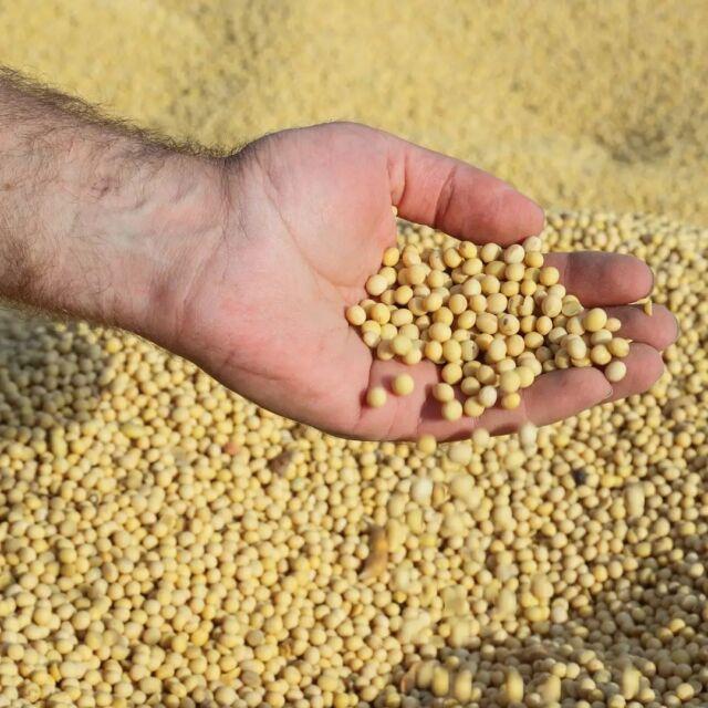 Sementes Cotribá: quem planta qualidade, colhe produtividade.📈🌱